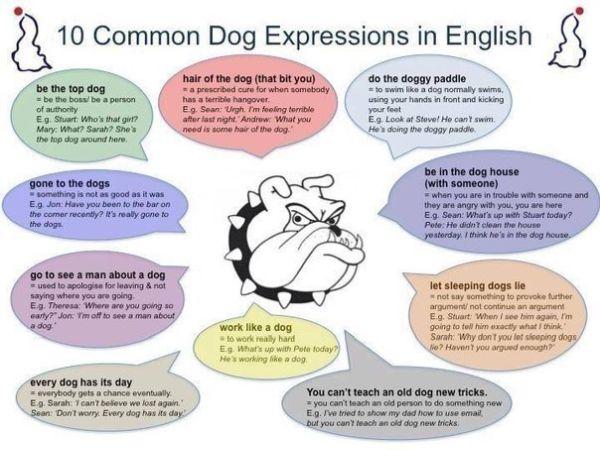informative speech about dogs