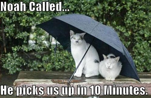 виды дождя на английском юмор